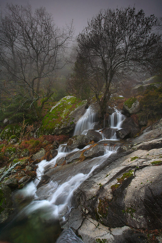 """Photograph """" Winter Forest """" by Juan Pavon on 500px"""