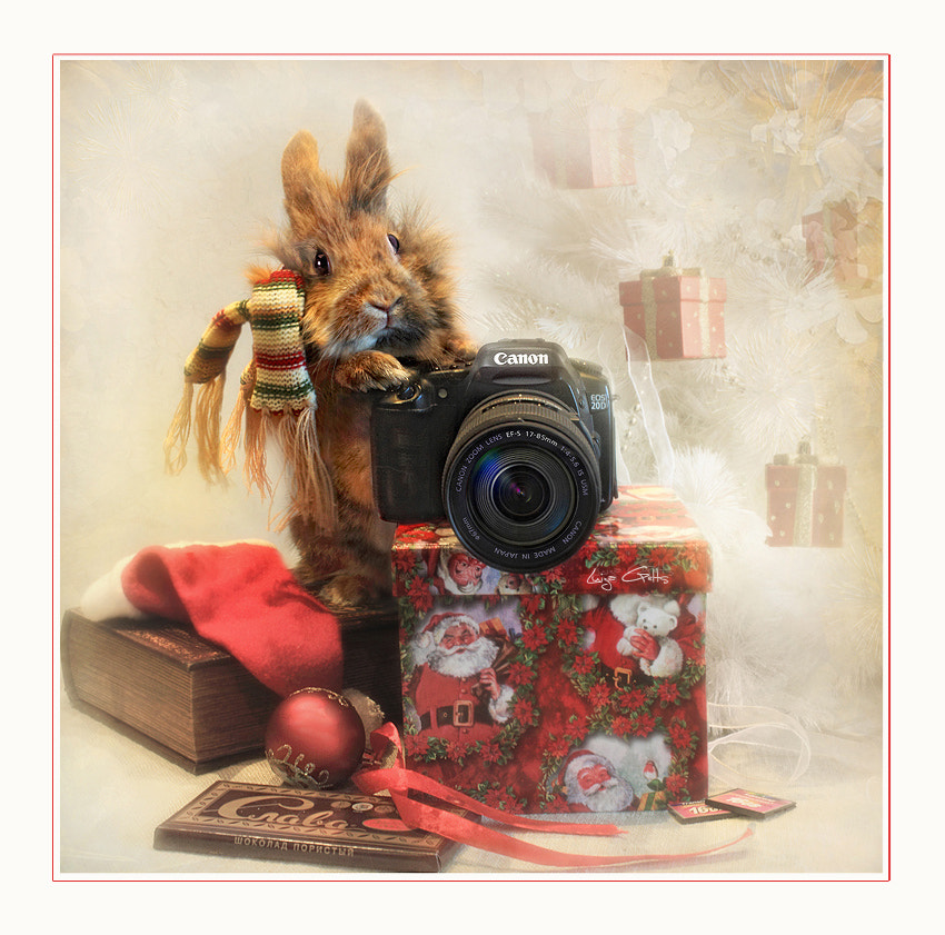 Photograph Please tell che-e-ese by Luiza  Gelts -            Луиза  Гельтс on 500px