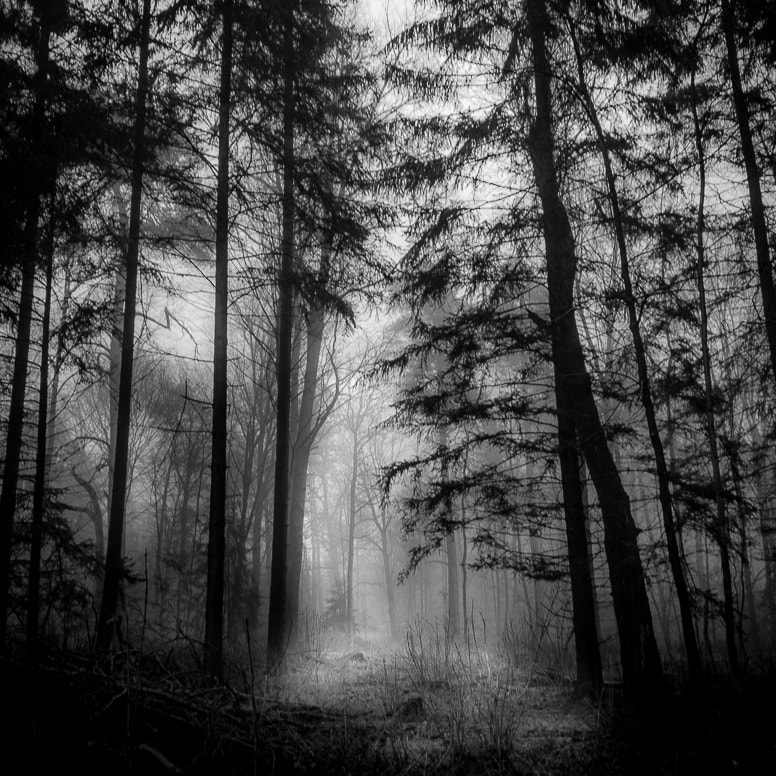 Photograph Black Forest by alex schoo on 500px