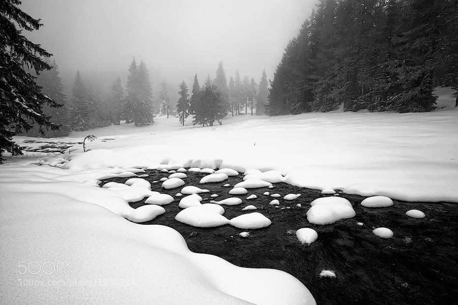 Photograph Morn In White by Evgeni Dinev on 500px