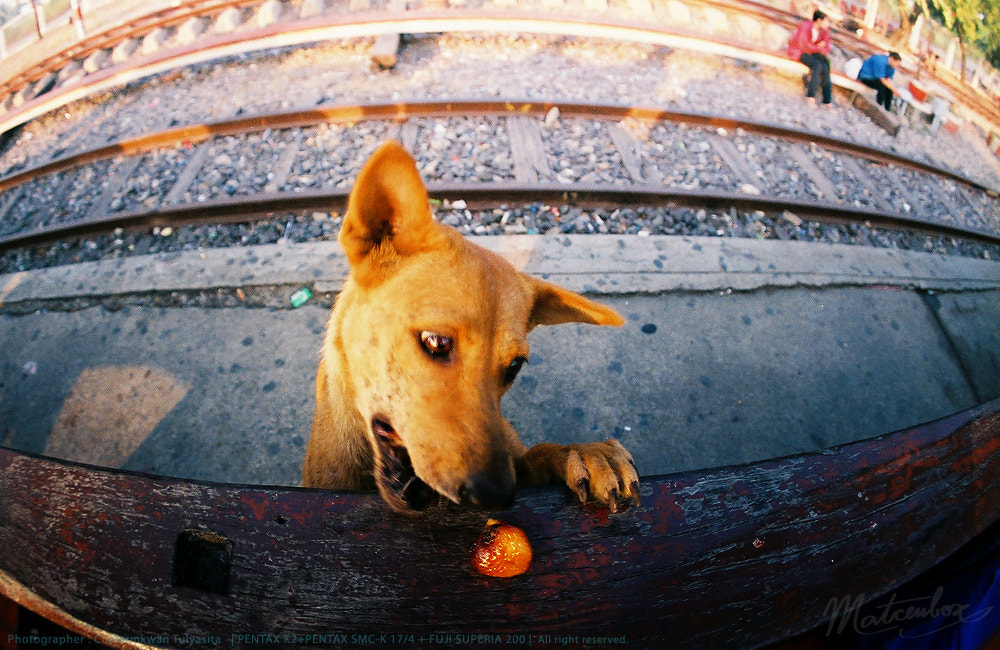 Photograph FILM : Hungry dog by Matcenbox  on 500px