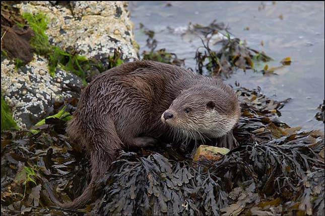 Photograph Otter by Ian Cook on 500px