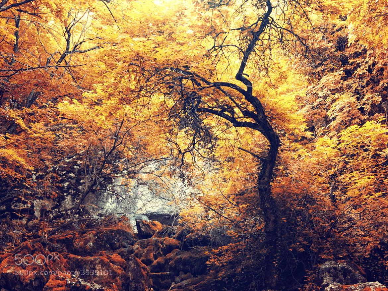 Photograph Nature 02 by Mihailo Radičević on 500px