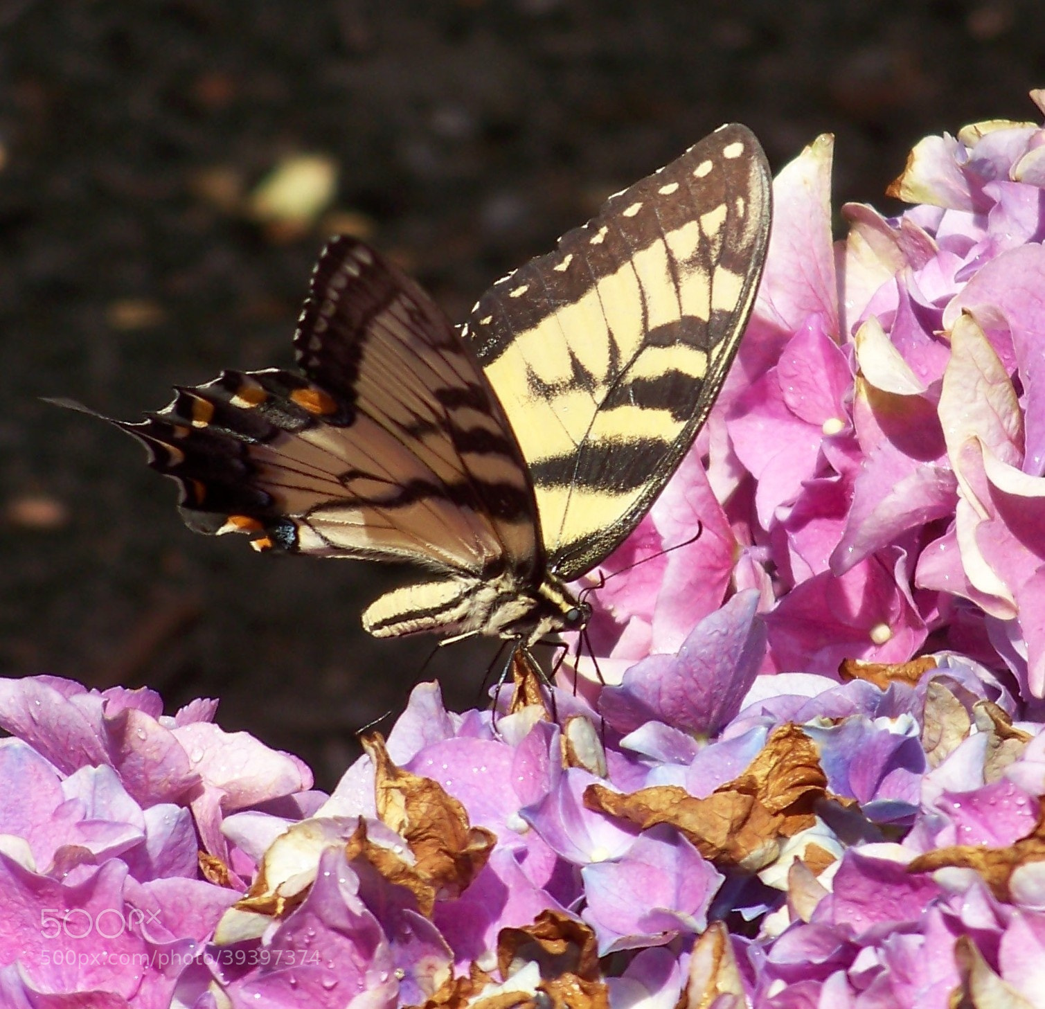 Photograph BEAUTIFUL BUTTERFLY by Gita Goodwin on 500px
