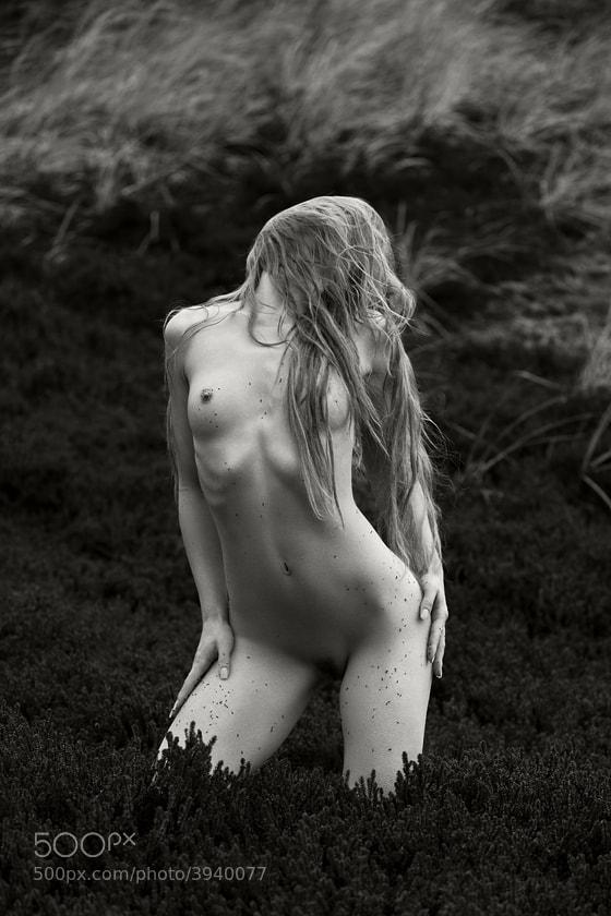 Photograph heather-clad by Jochen Dreess on 500px