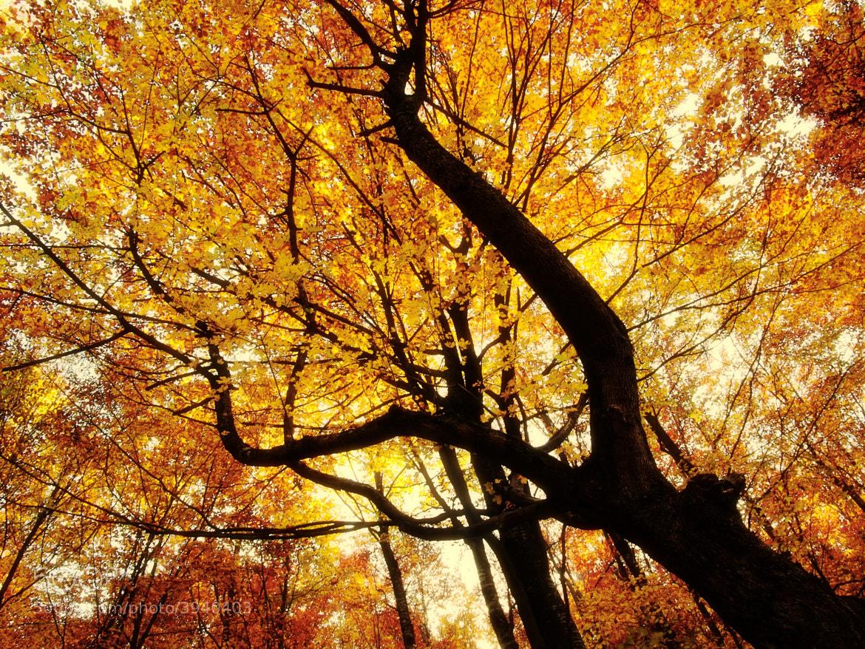 Photograph Nature 04 by Mihailo Radičević on 500px
