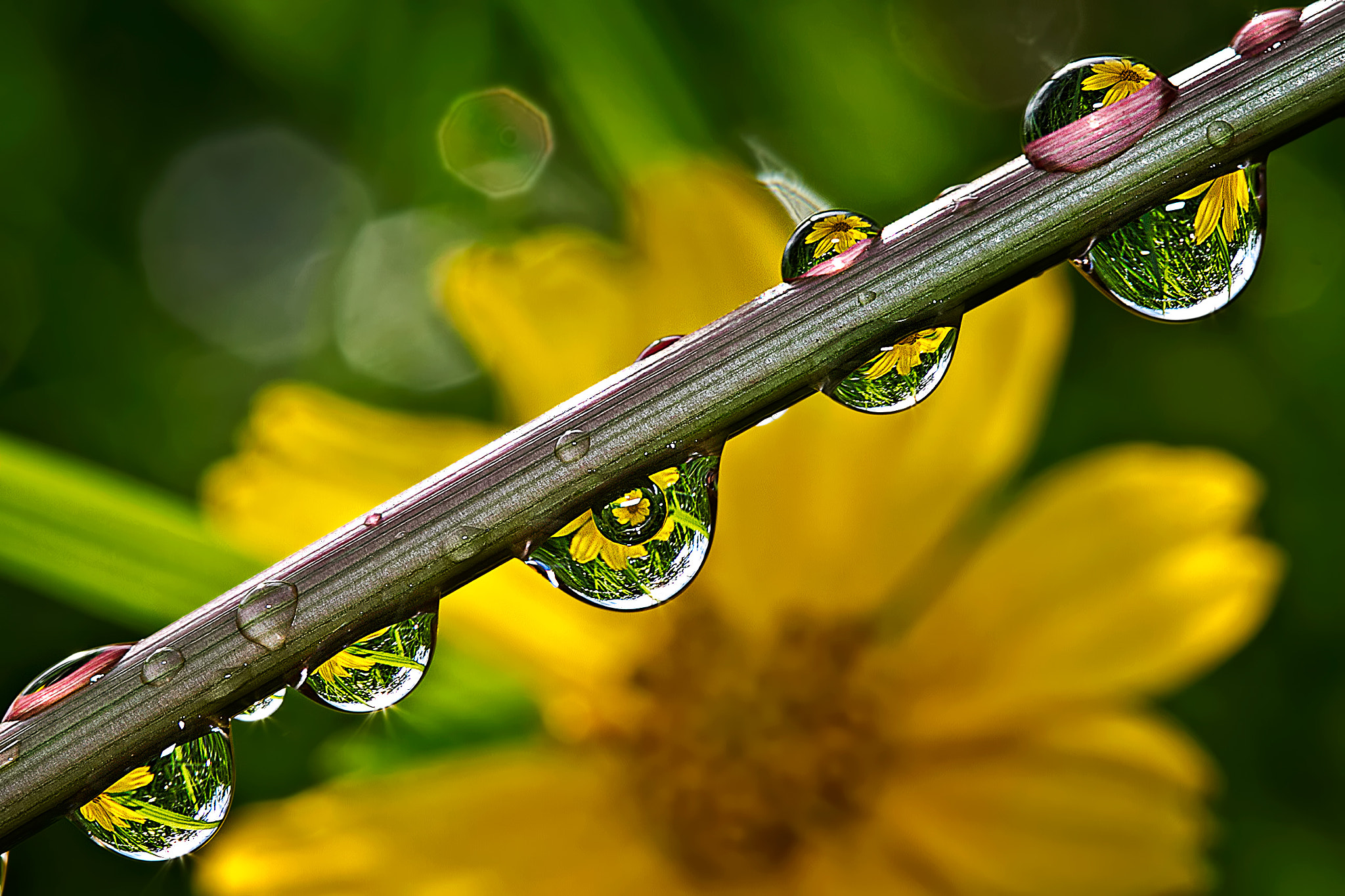Photograph Only 8 Drop of Dew  by Nunu Rizani on 500px