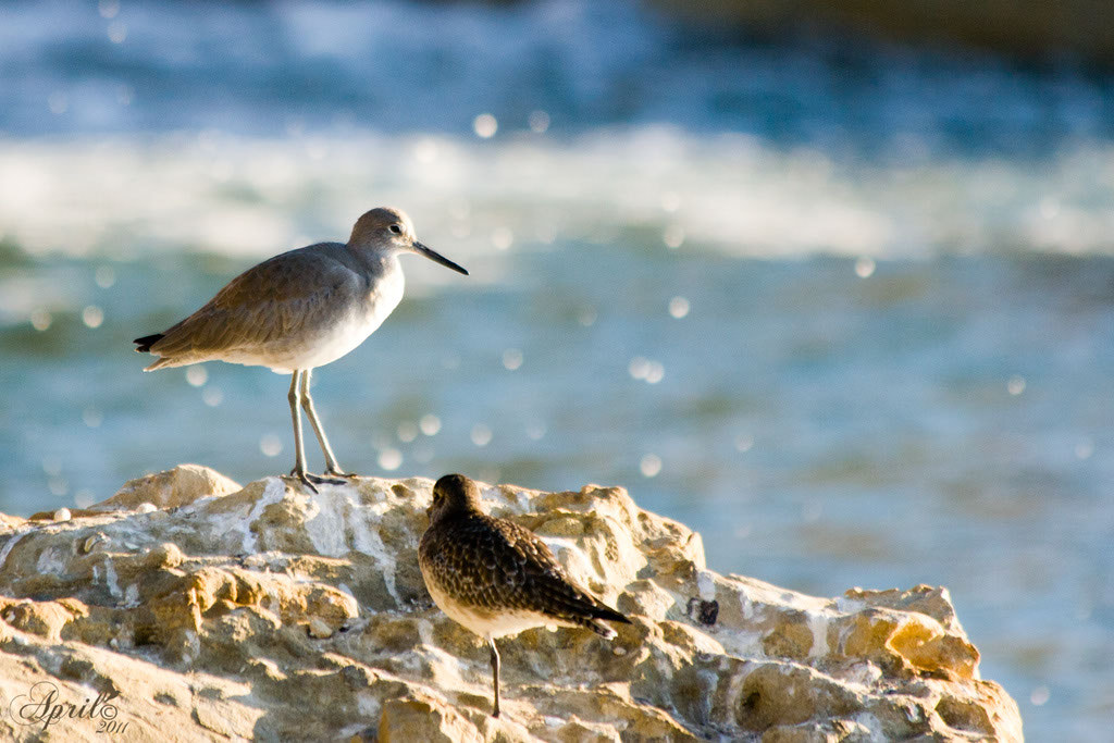 Photograph Sandpiper Rock by April  on 500px