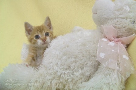 Photograph Tabby Kitty by Gita Goodwin on 500px