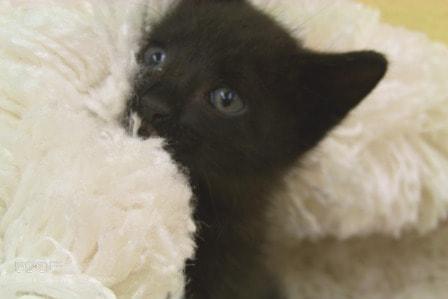 Photograph Black Kitty by Gita Goodwin on 500px