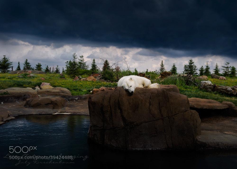 Photograph Storm Bathing by Julz Kirschenbaum on 500px