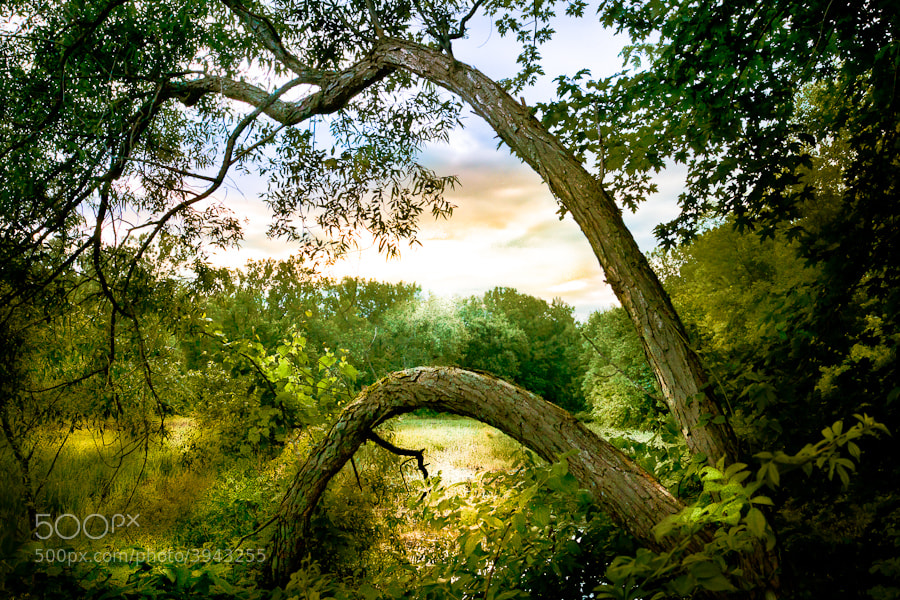 Photograph Nature's Arches by Paul Jolicoeur on 500px