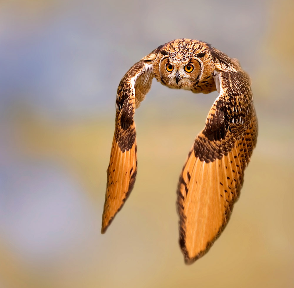 Photograph experiments by Stefano Ronchi on 500px