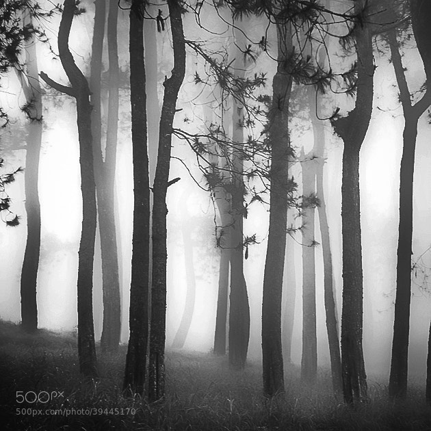 Photograph Forest by Hengki Koentjoro on 500px