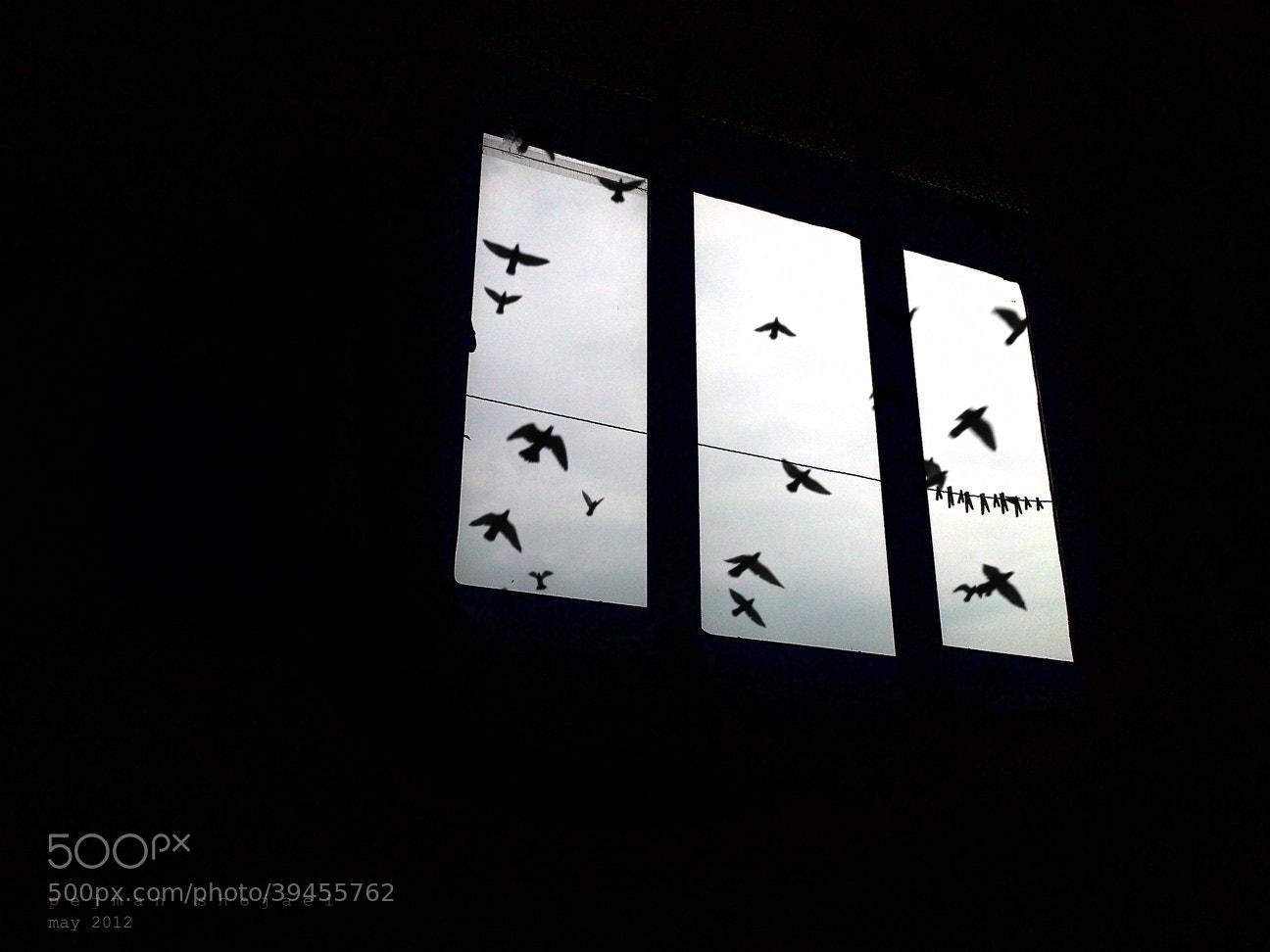 Photograph .... by Pejman Shojaei on 500px