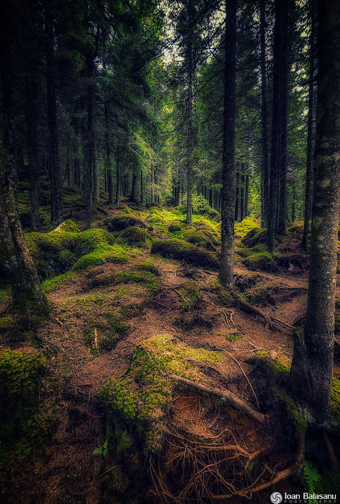 Photograph Enchanted forest by Ioan Balasanu on 500px
