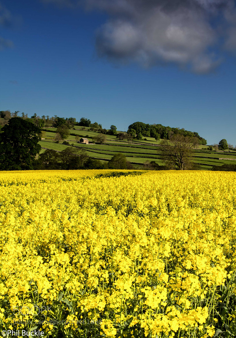 Photograph Rape Field by Phil Buckle on 500px