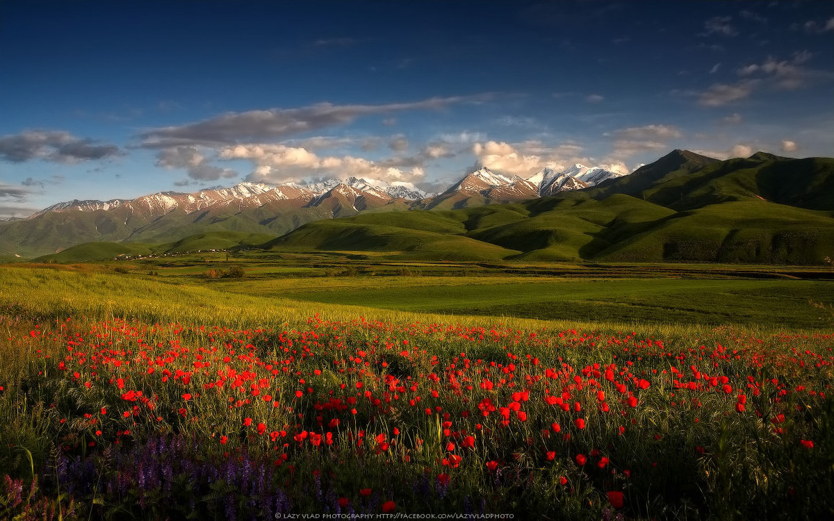 Photograph Spring Flowers by Lazy Vlad on 500px