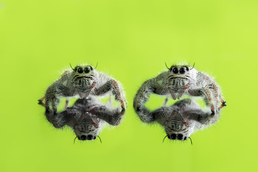 Photograph twin spider by Michael therendo on 500px