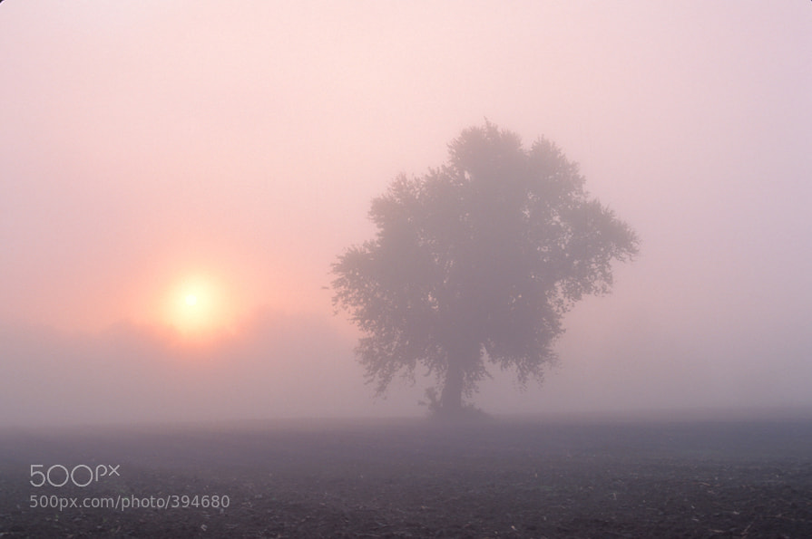 Photograph Misty Morning Sunrise by Larry Landolfi on 500px