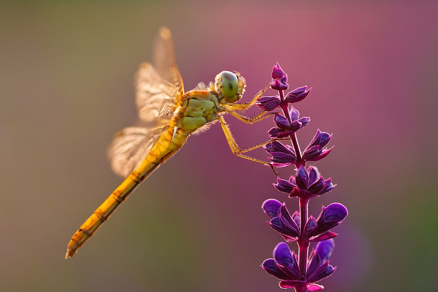 Photograph At rest by Tibor Jantyik on 500px