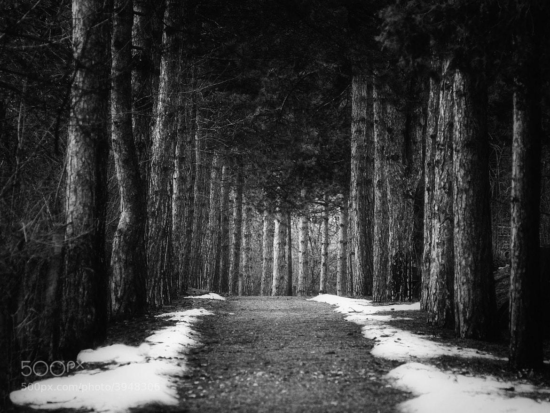 Photograph Nature 08 by Mihailo Radičević on 500px