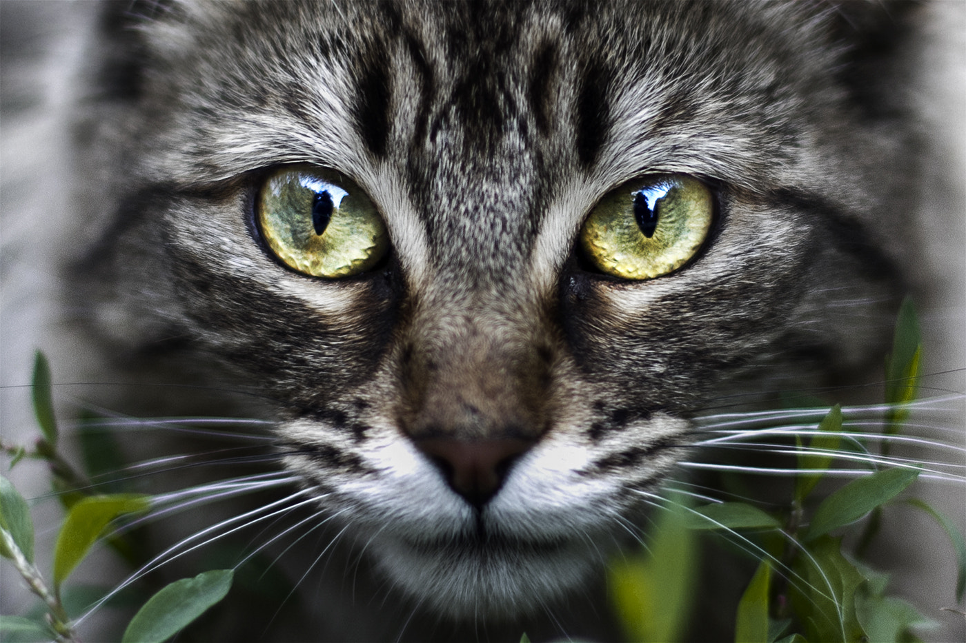 Photograph Cat by Giovanni Valdebenito on 500px