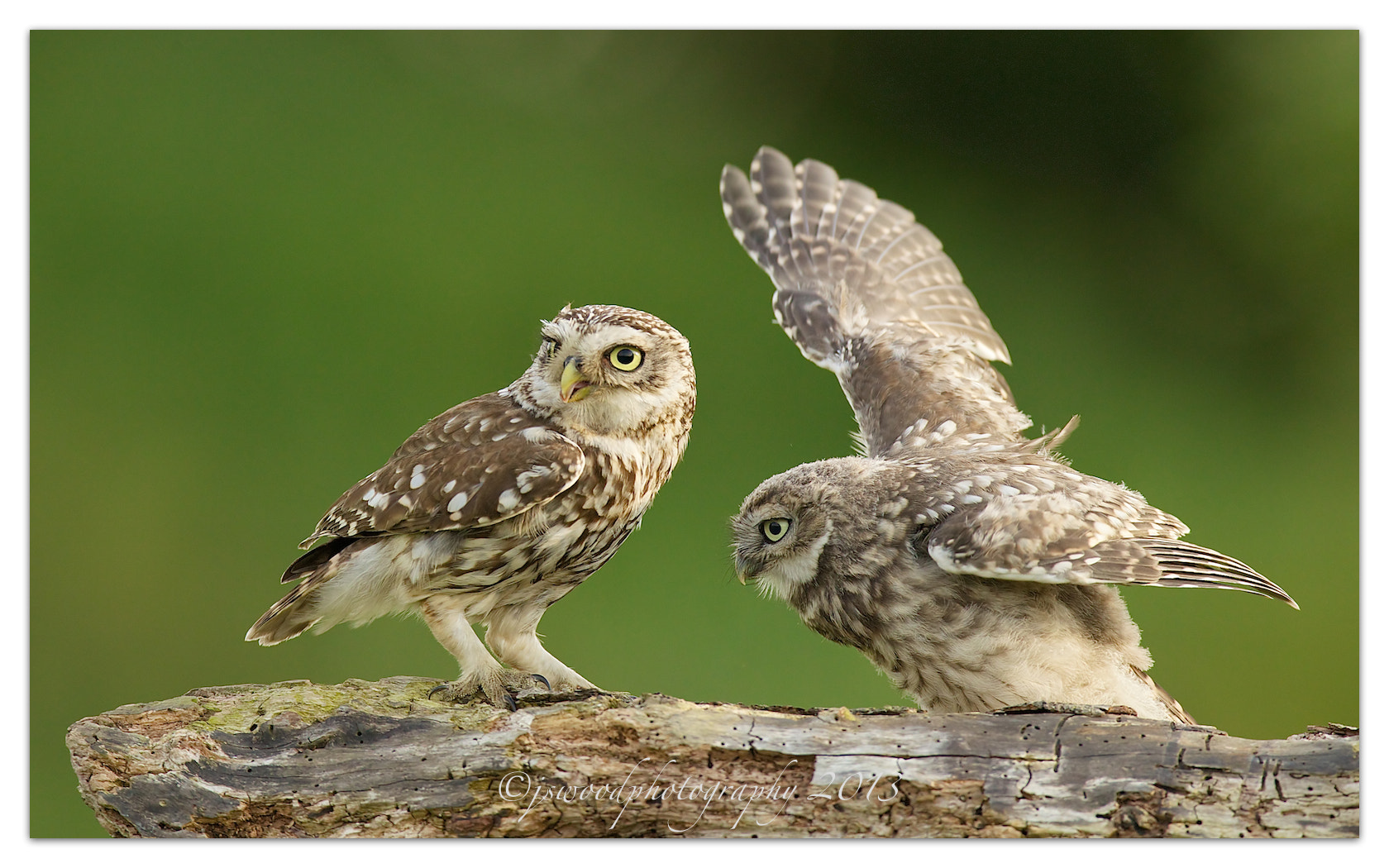 Photograph Parent and Young by Jason Wood on 500px