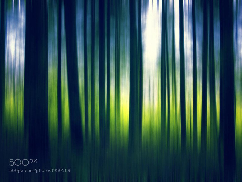 Photograph Nature 09 by Mihailo Radičević on 500px