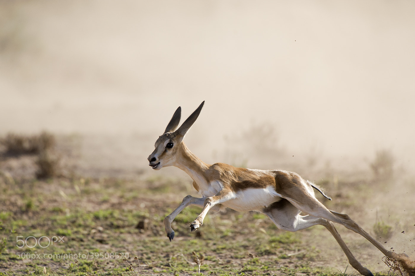 Photograph Run of Live by Bridgena Barnard on 500px