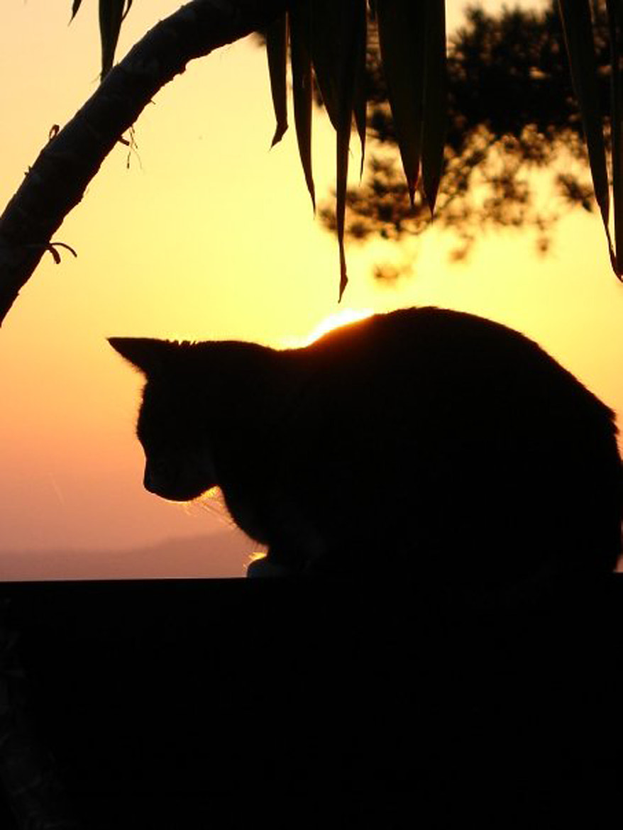Photograph Cat by Anja Carst on 500px