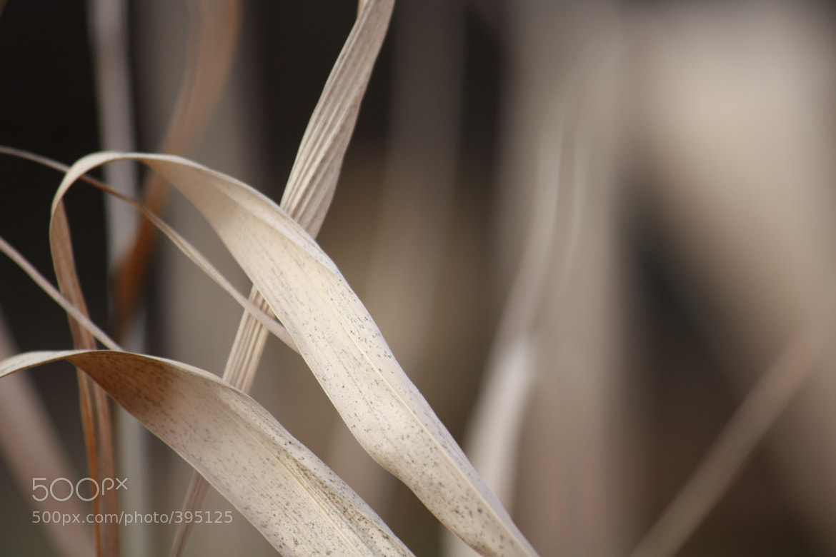 Photograph A little bit Bokeh by Frank Haverbeck on 500px