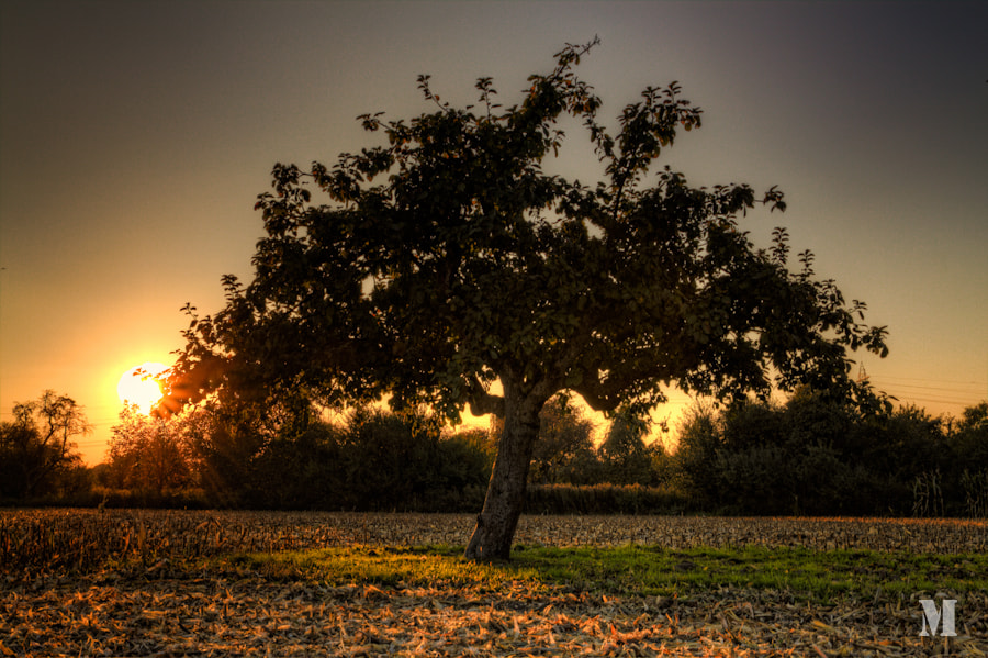 Photograph tree by Matthias Schulte on 500px