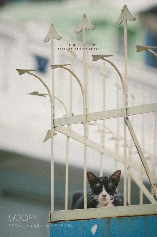 Photograph a cat nap by Jirawas Teekayu on 500px