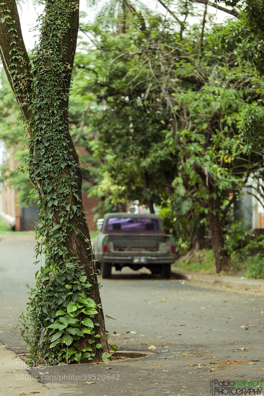 Photograph El arbol en la calle.- by Pablo Reinsch on 500px