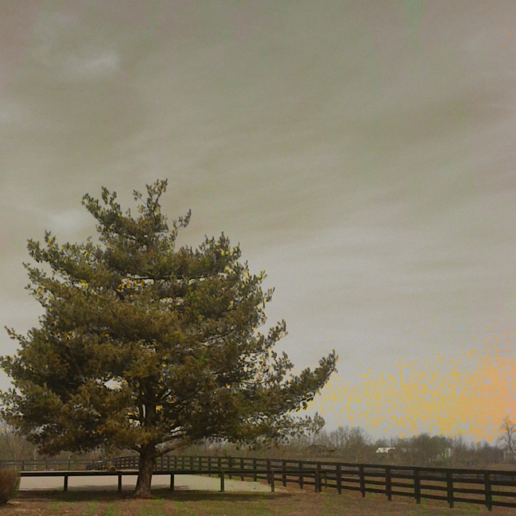 Photograph The Tree by Brian Lauer on 500px