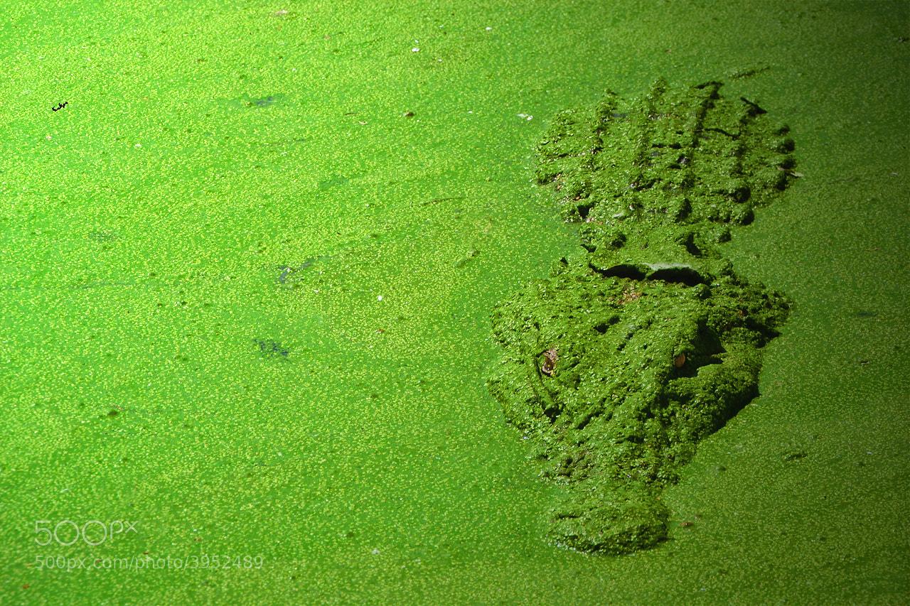 Photograph Camouflage by Muhammad Buchari on 500px