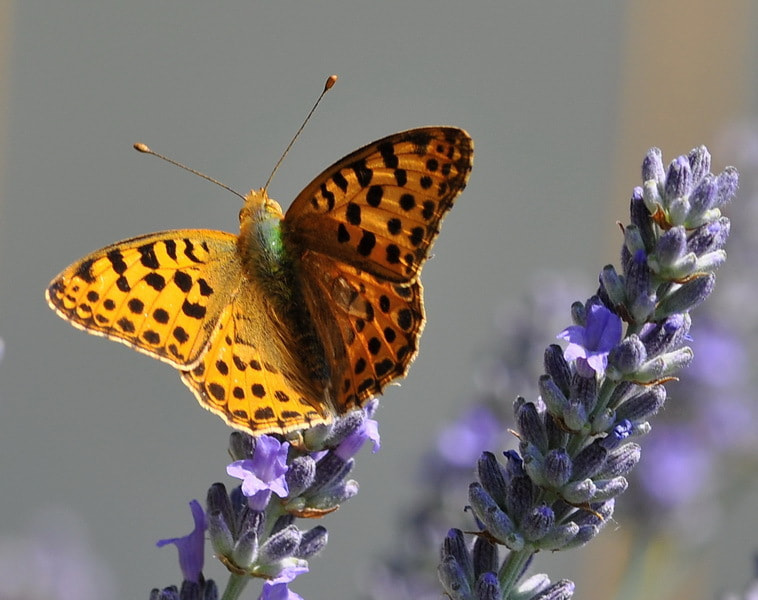 Photograph butterfly by tugba kiper on 500px