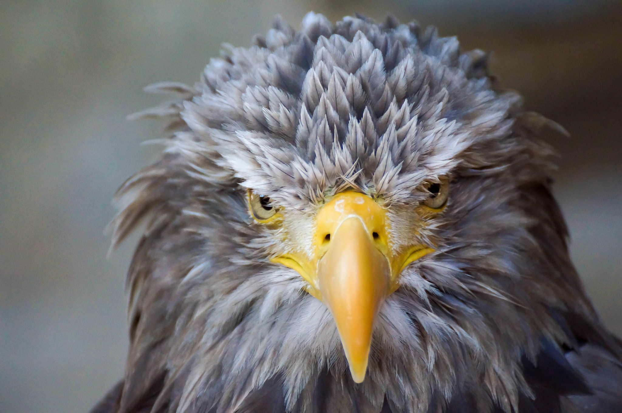 Photograph Eagle by Ralf Bessoth on 500px