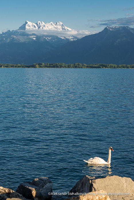 Photograph Swan and Geneve Lake by Alyaksandr Stzhalkouski on 500px