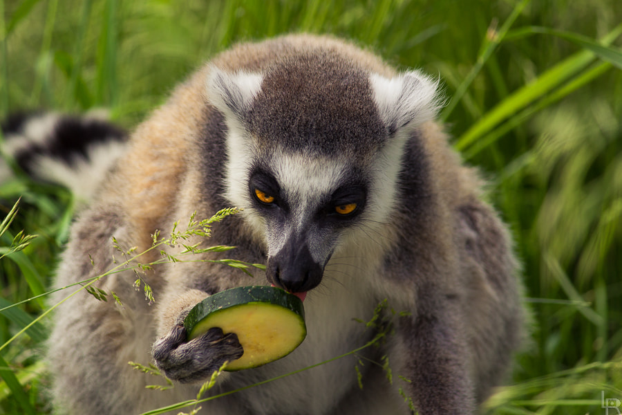Photograph Yummy? by Emilie Filrouge on 500px