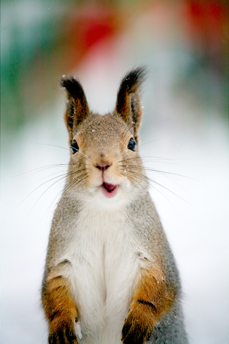 Photograph A squirrelsaur by Gleb Skrebets on 500px