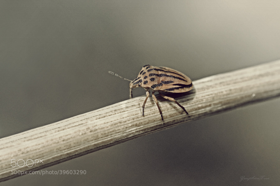 Photograph Macro by yavuzselimturan  on 500px