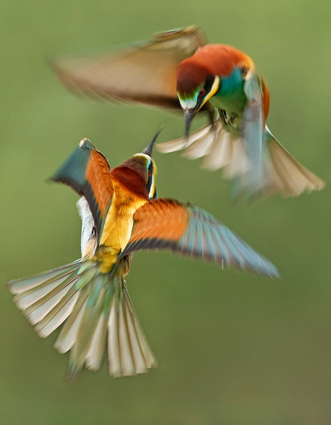 Photograph fight by Ivan Ivanov on 500px