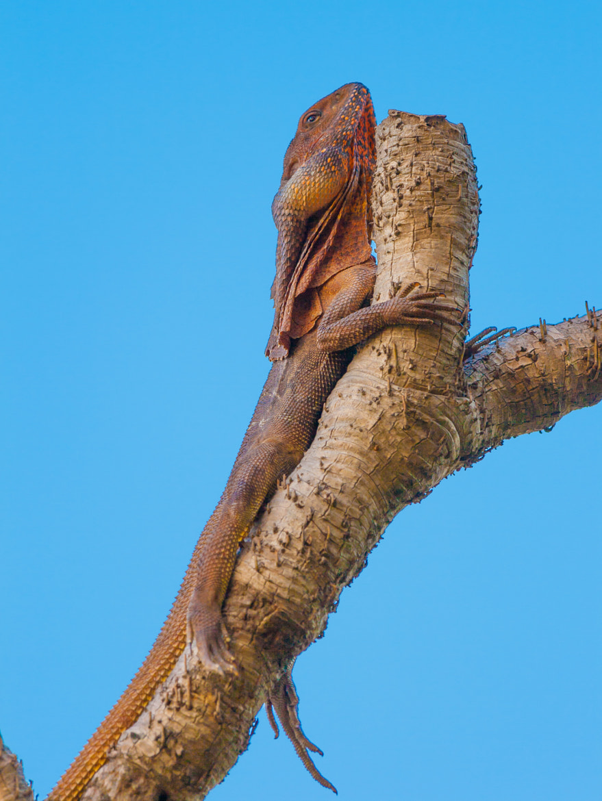 Photograph High Alert by Darren Oster on 500px