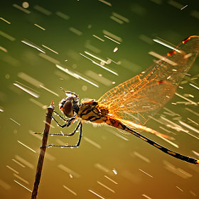Never give up by shikhei goh (shikhei)) on 500px.com