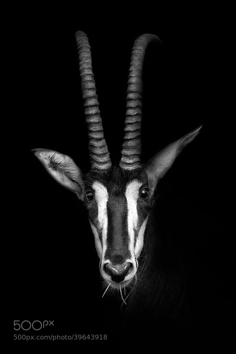 Photograph The Sable by John Dickens on 500px