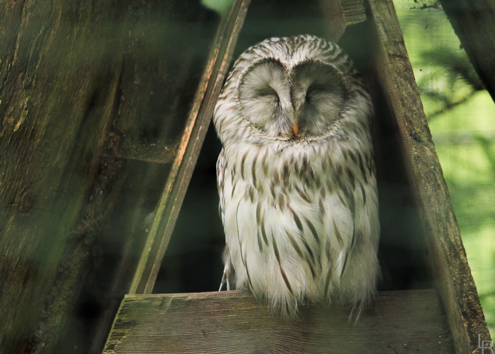 Photograph Happy owl by Emilie Filrouge on 500px