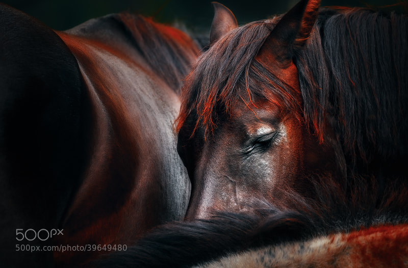 Photograph Sleep huddle by Martin Stantchev on 500px