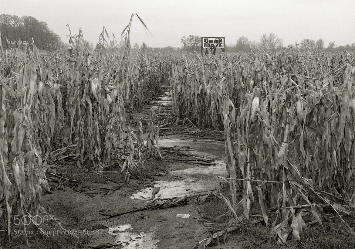 Photograph Corn Maze in Winter, Sauvie Island by Austin Granger on 500px